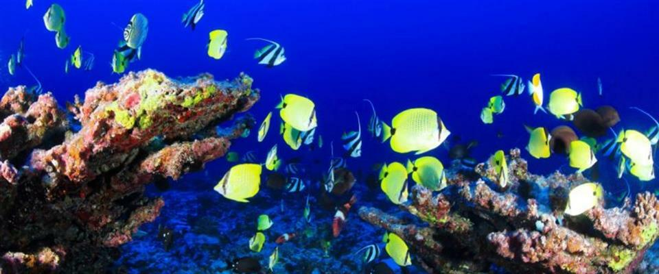 2 Hour Snorkeling Tour $65 per person