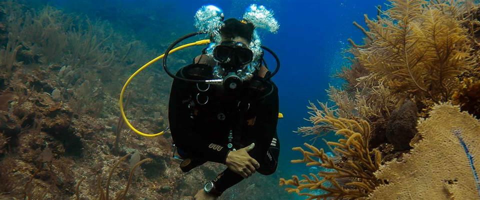 Deep Dive (1 tank)