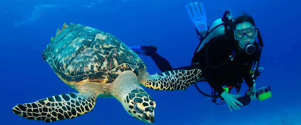 Multi-Day Dive Packages