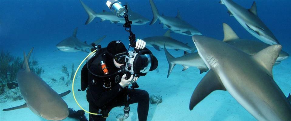 Shark Shooter Program