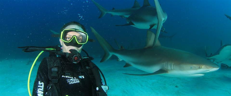 Shark Specialty Awareness Course