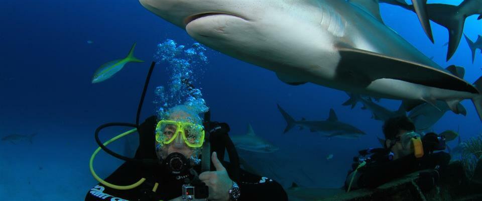 Shark Feeder Program