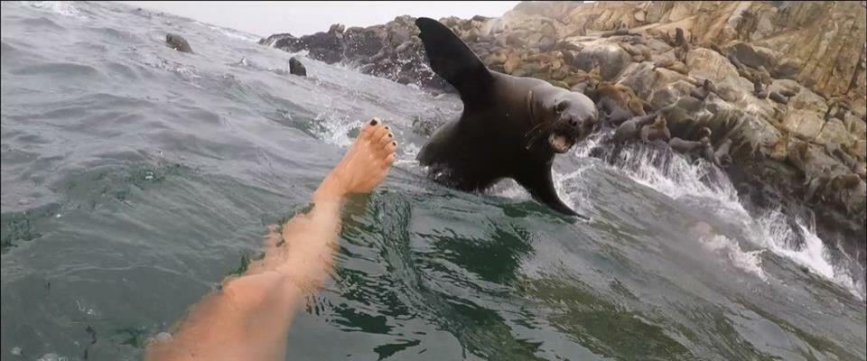 Face to face with a sea lion in Lima Peru