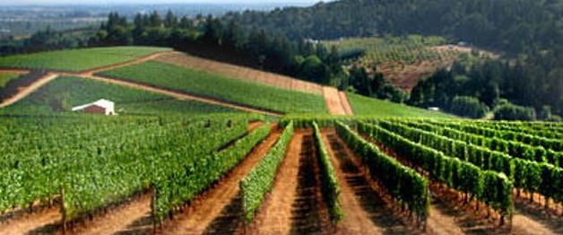 Private Wine Tour for Four