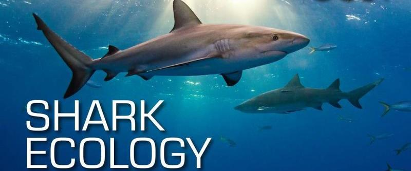 SSI Shark ecology specialty course + 2 tank SCUBA dive package