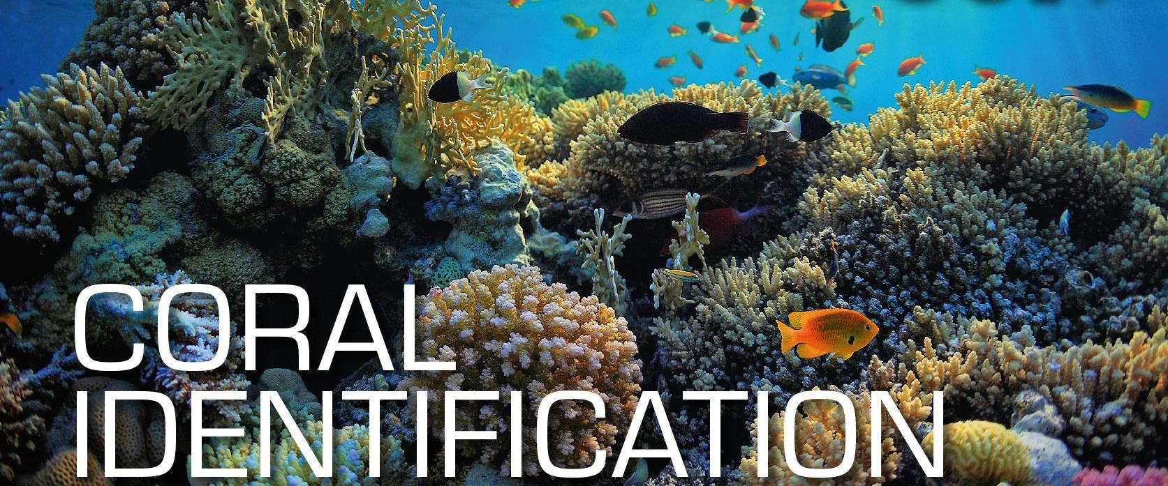 SSI Coral identitication ecology course + 2 tank SCUBA dive