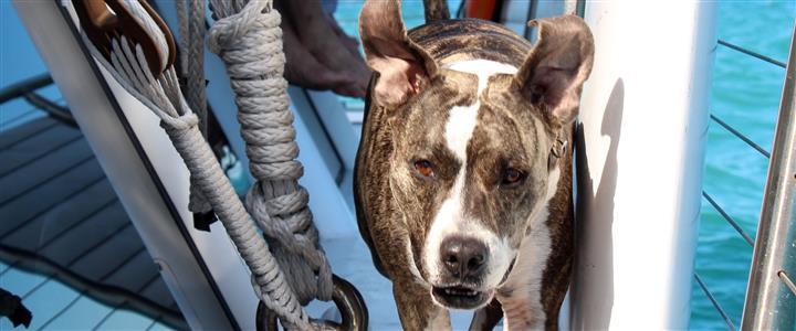 SV Argo Navis Doggie Day Sail