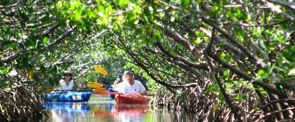 Kayaking the Mangrove Jungle guided tour