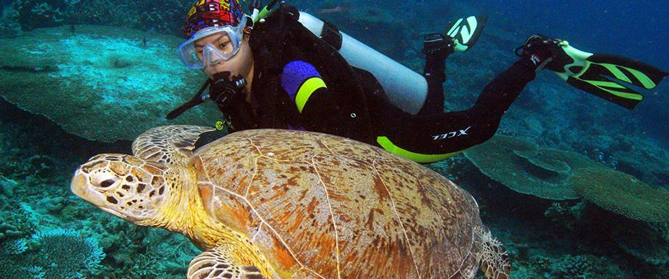 Dive/201701160623222156-Diver & turtle.jpg