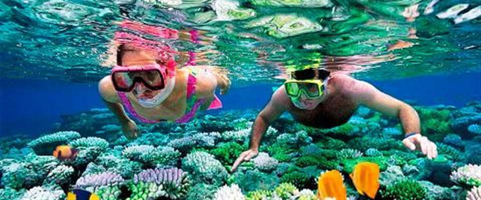 Snorkel Trips